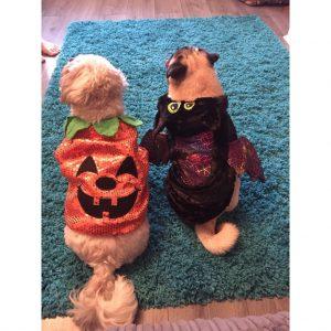 Olly and Teddy 2